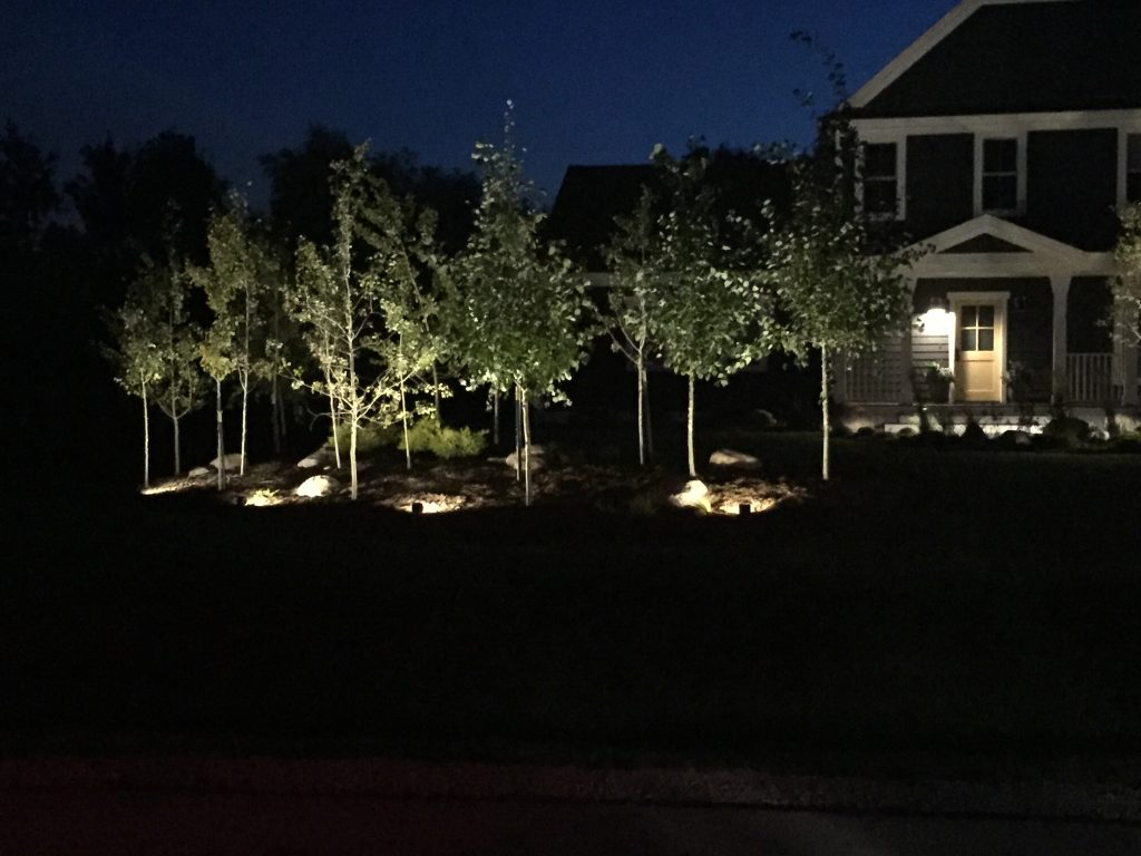 These are lights illuminating a row of trees in the font yard.