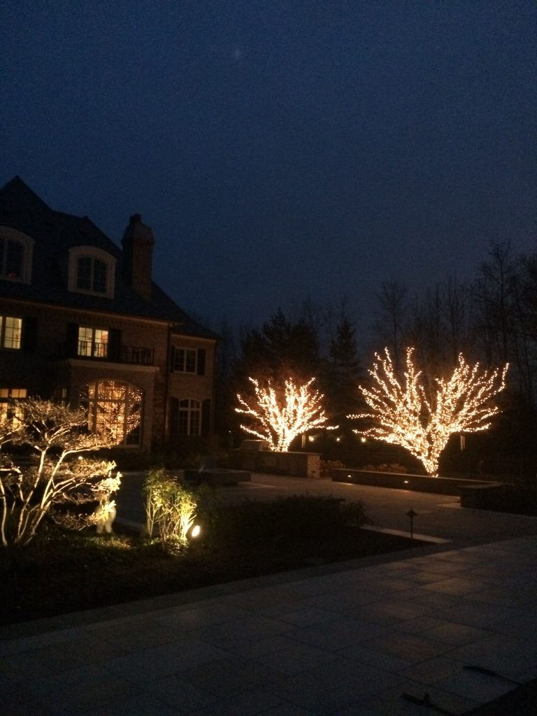 These are holiday lights on bare trees in the backyard.