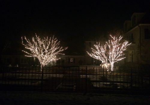These are holiday lights around two bare trees.