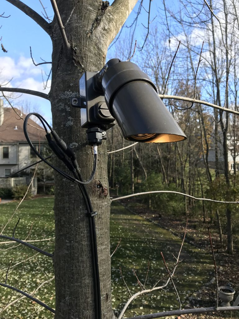 This is outdoor lighting on a tree.