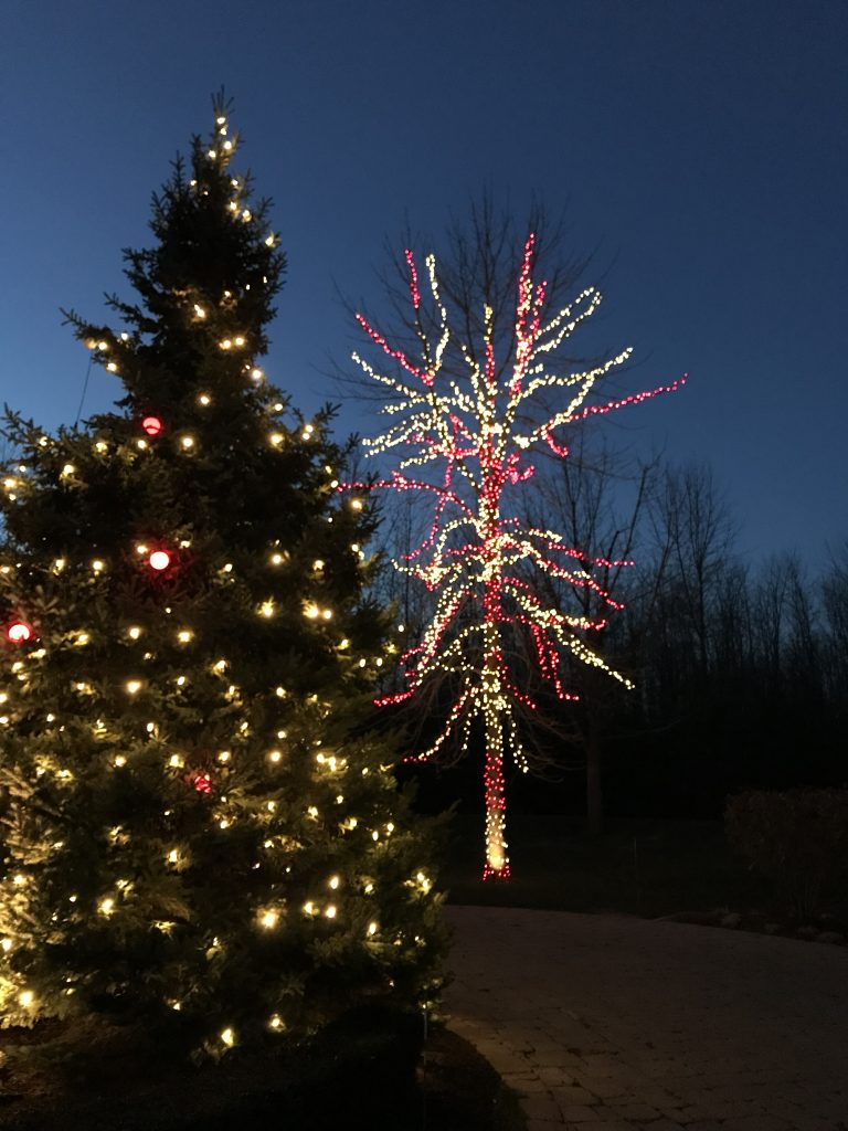 This is red and white holiday lighting around a bare tree.